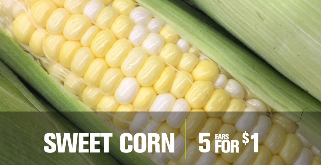 Corn 4 for 1