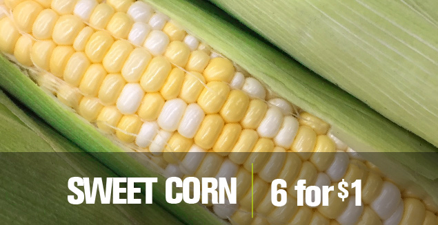 Sweet Corn 6 for 1