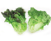 Red or Green Leaf Lettuce