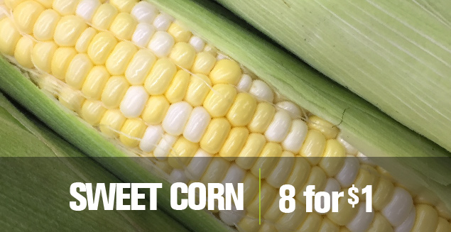 Sweet Corn 8 for $1